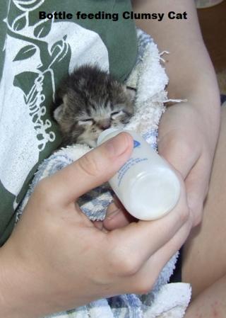 2-bottlefeedingclumsykitten